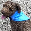 Safe to Shake Cooling Dog Bandana