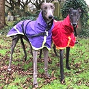 StoS Sighthound Coat