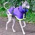 Safe to Shake Dog Coats
